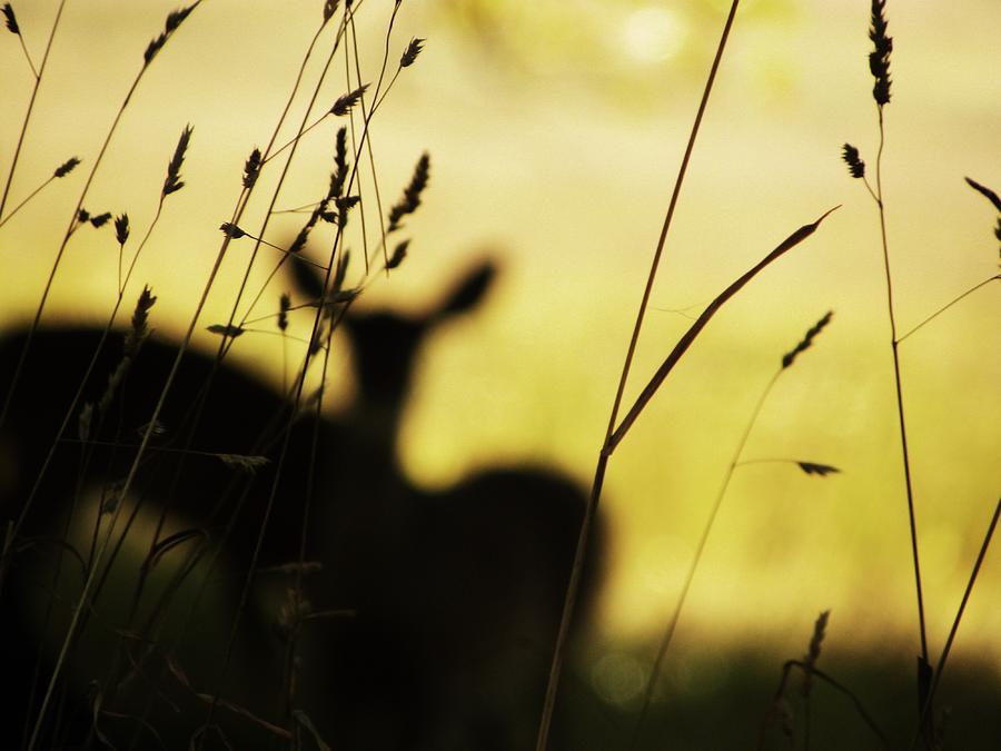 Deer Photograph - Hidden Life Surrounds by Christian Rooney