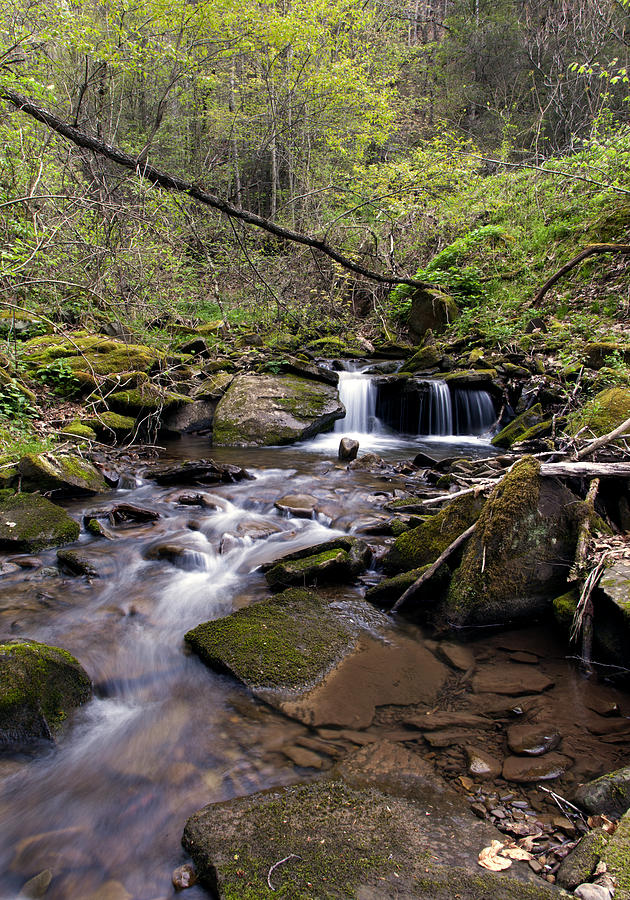 Outdoors Photograph - Hidden Streambed  by David Lester