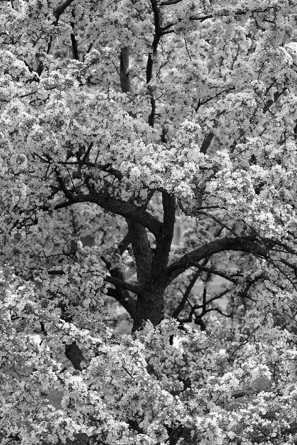 Hidden Tree by Dylan Lees