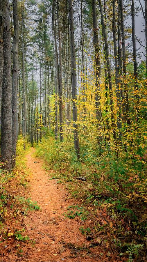 Pine Photograph - Hidden Valley by Bill Wakeley