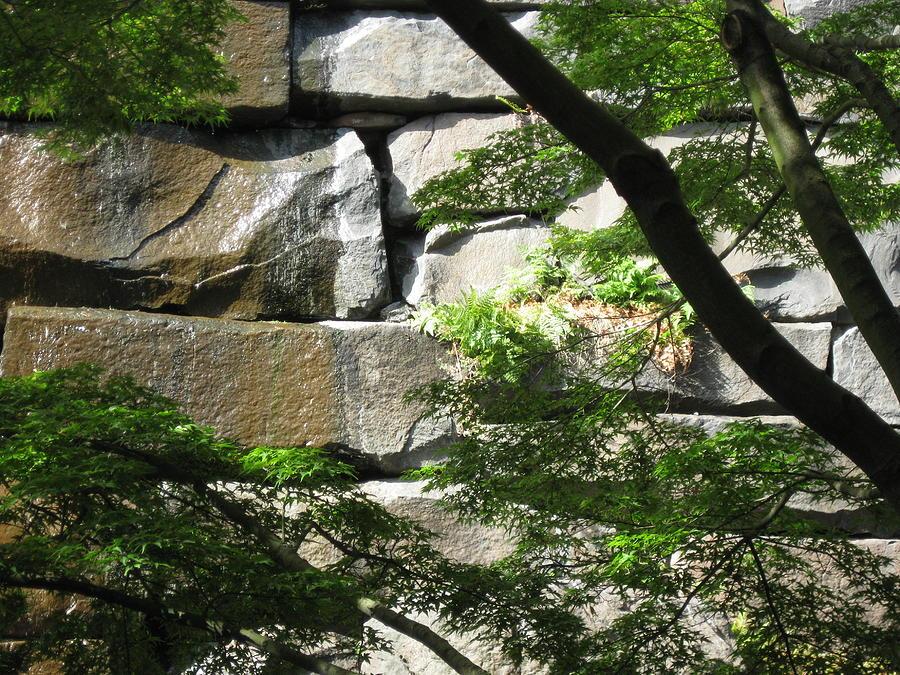 Hidden Waterfall Photograph