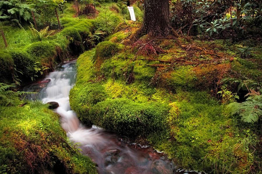 Scotland Photograph - Hidden Woodland Corner. Benmore Botanical Garden. Scotland by Jenny Rainbow