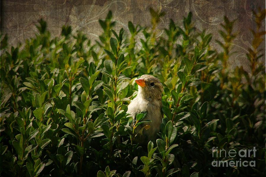 Hide And Seek Photograph - Hide And Seek by Mariola Bitner