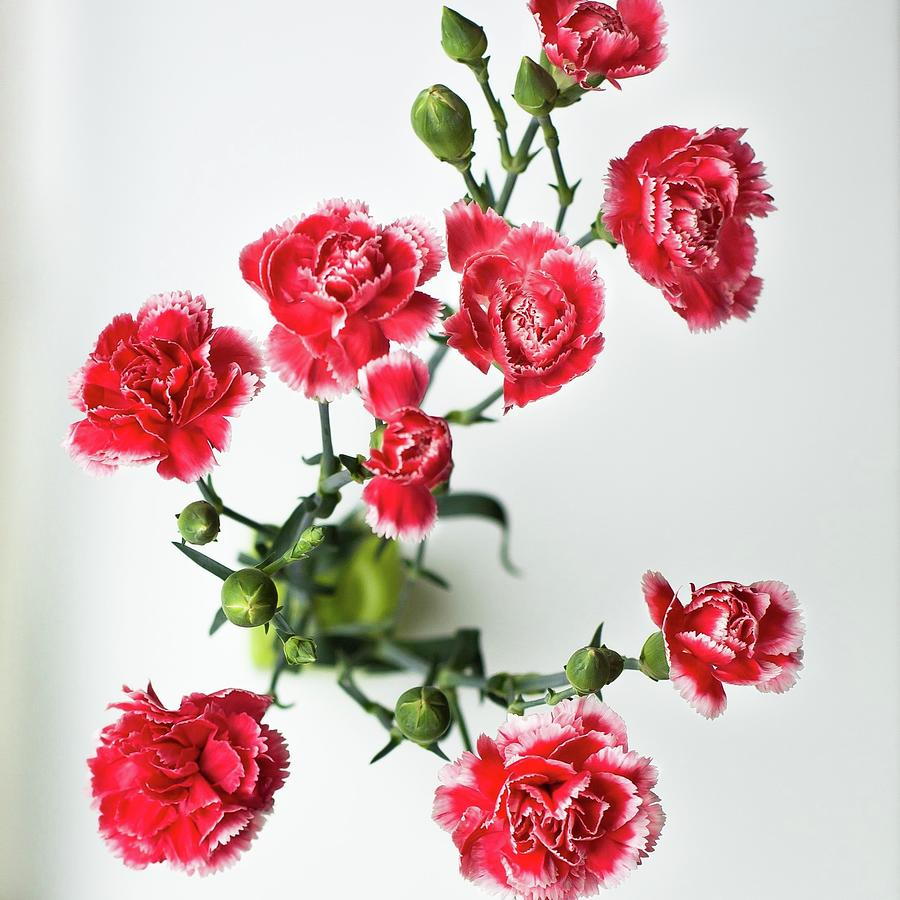 High Angle View Of Red Carnations Photograph by Kateryna Kyslyak / Eyeem
