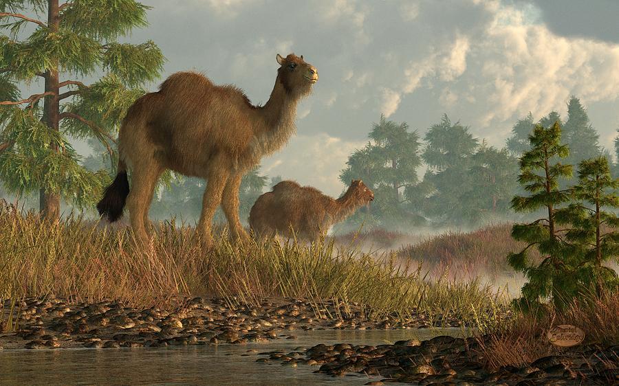 Camel Digital Art - High Arctic Camel by Daniel Eskridge