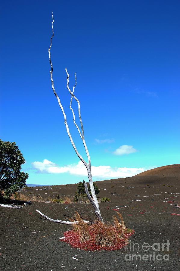 Hawaii Photograph - High Atop Maunakea On Hawaii by Micah May