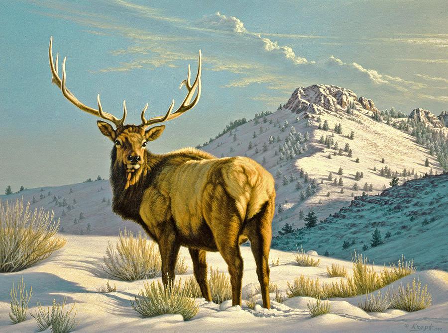 Wildlife Painting - High Country Bull by Paul Krapf