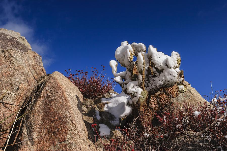Cactus Photograph - High Desert Snow 2 by Scott Campbell