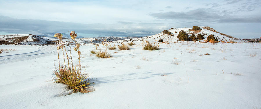 Snow Photograph - High Desert Snow by Betty Wiley