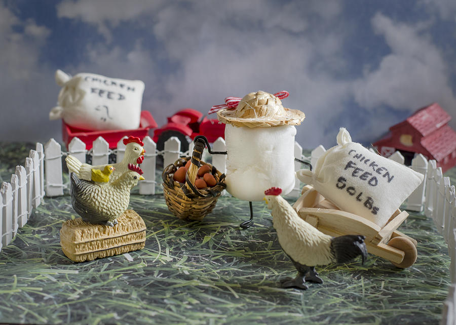 Chickens Photograph - High Fructose Farming by Heather Applegate