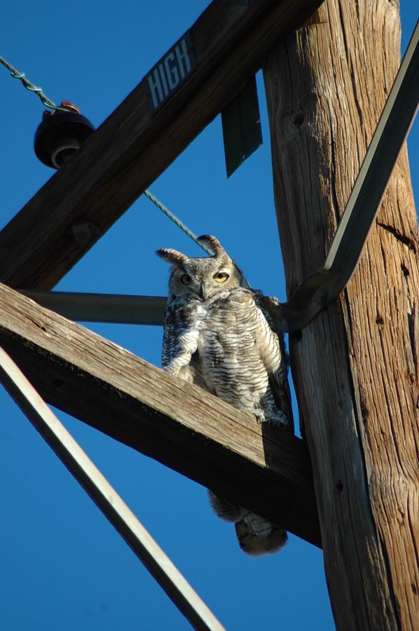Birds Photograph - High Up by Scott Ware