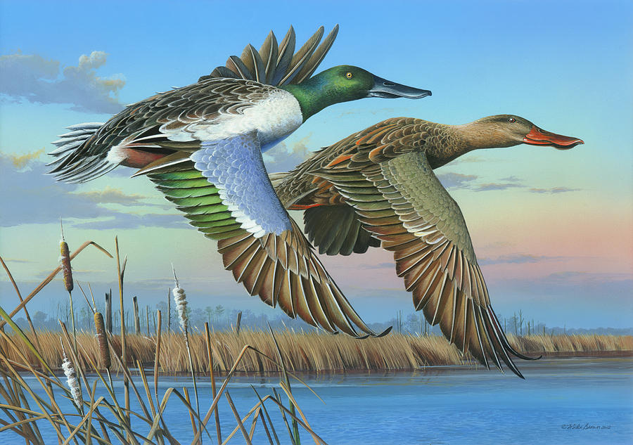 Northern Shoveler Painting - High Water by Mike Brown
