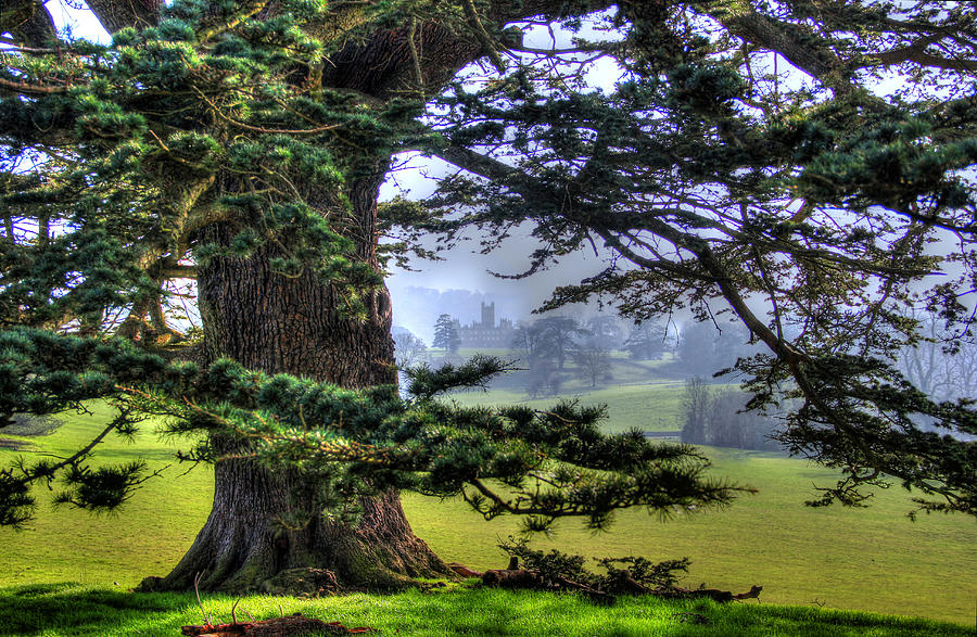 Tree Photograph - Highclere castle aka Downton Abbey  by Peggy Berger