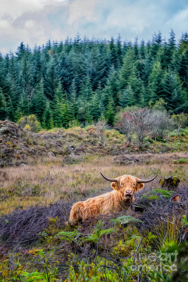 Hdr Photograph - Highland Cow by Adrian Evans