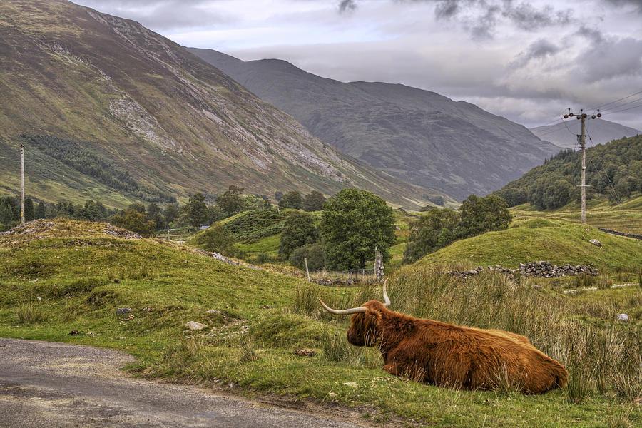 Scotland Photograph - Highland Cow In Scotland by Jason Politte