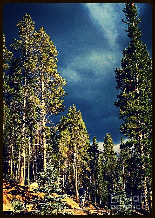Colorado Photograph - Hike In The Woods by Garren Zanker