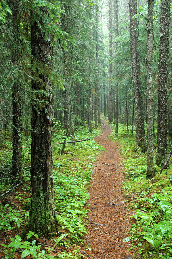 Hike to White River in Pukaskwa National Park by Rob Huntley