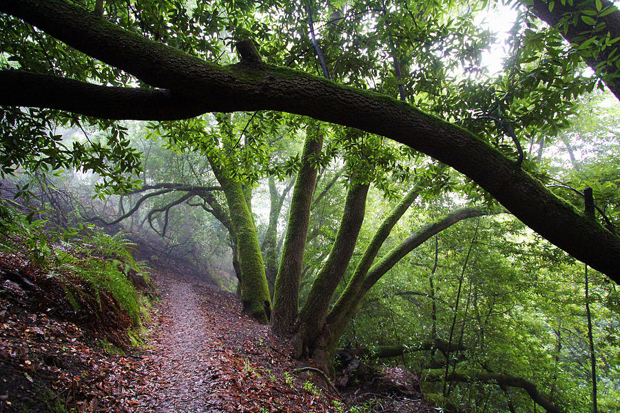 Western Sword Fern Photograph - Hiking Huckleberry by Hugh Stickney
