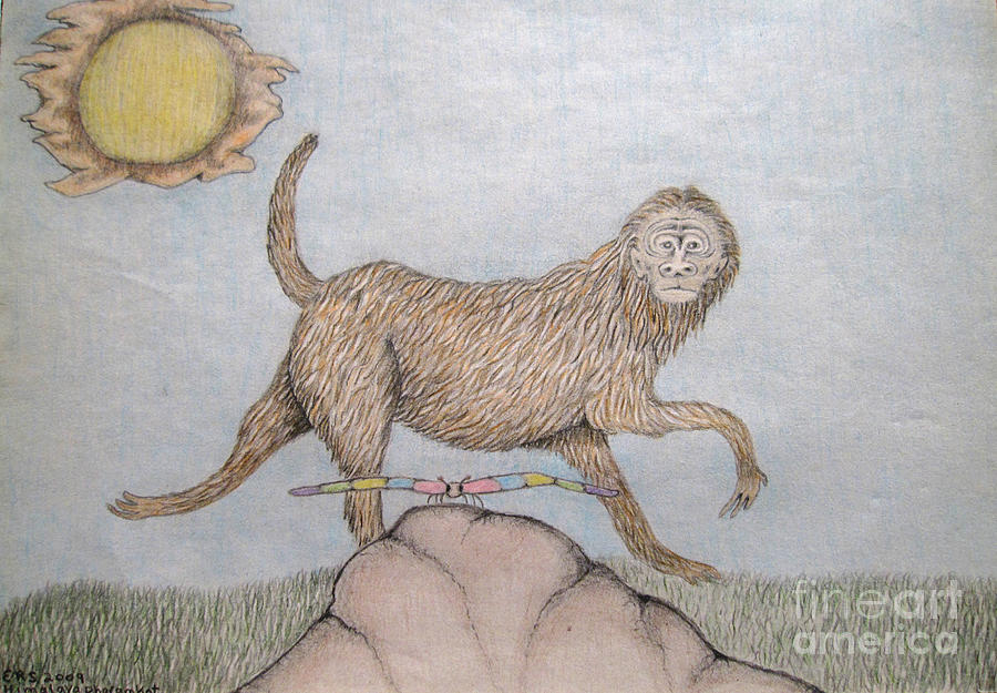 Himalaya Drawing - Himalaya Monkey Dragonfly Encounter by Elizabeth Stedman