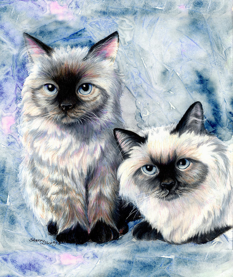 Cat Painting - Himalayan Duo by Sherry Shipley