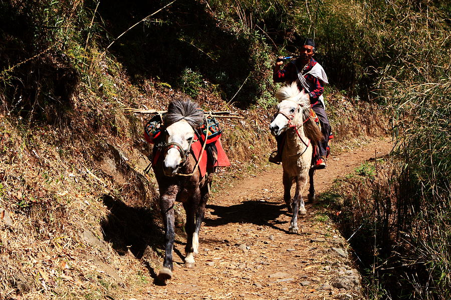 Horses Photograph - Himalayan Horseman - Nepal by Aidan Moran
