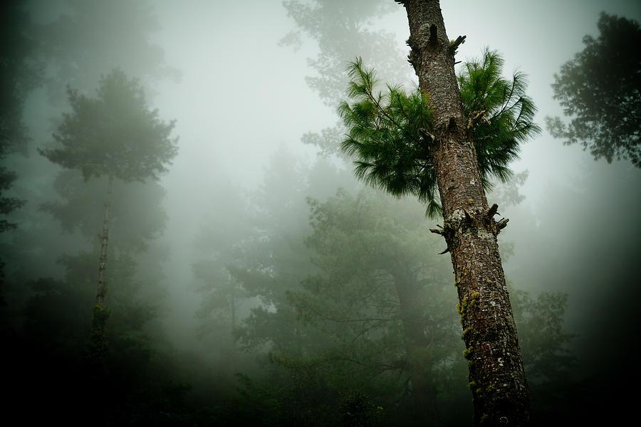 Yatra Photograph - Himalyas Mist by Raimond Klavins