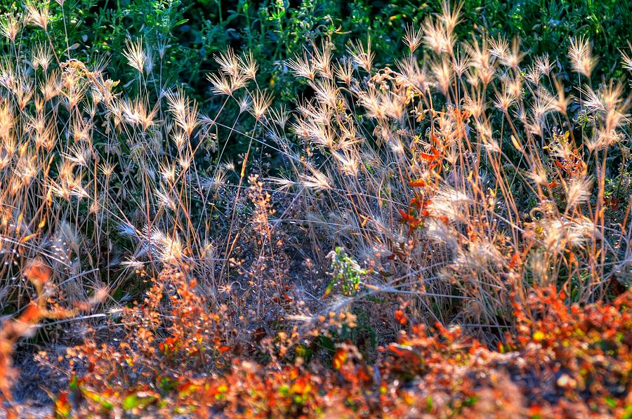 Hint Of Fall Colors 15813 Photograph