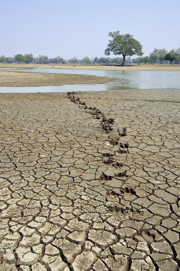 Africa Photograph - Hippo Footprints by Science Photo Library