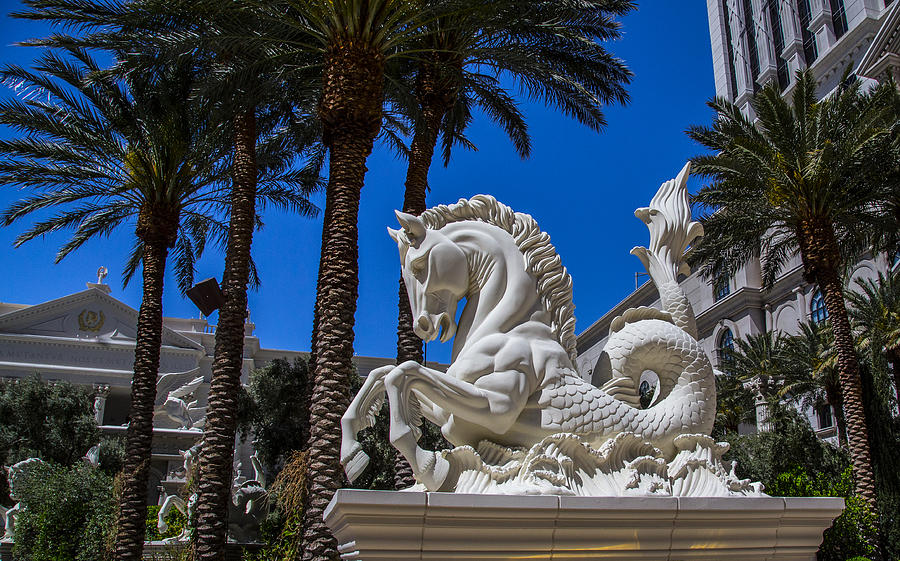Hippocampus At Caesars Palace Photograph By Angus Hooper Iii