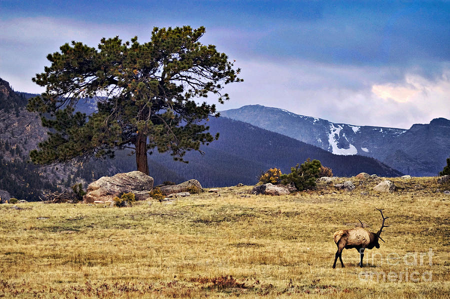 Landscape Photograph - His Last Winter by Catherine Fenner
