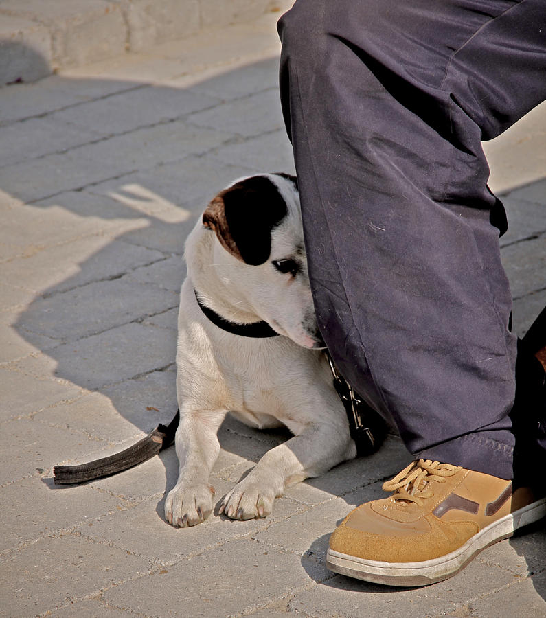 Dog Photograph - His Masters Foot by Odd Jeppesen