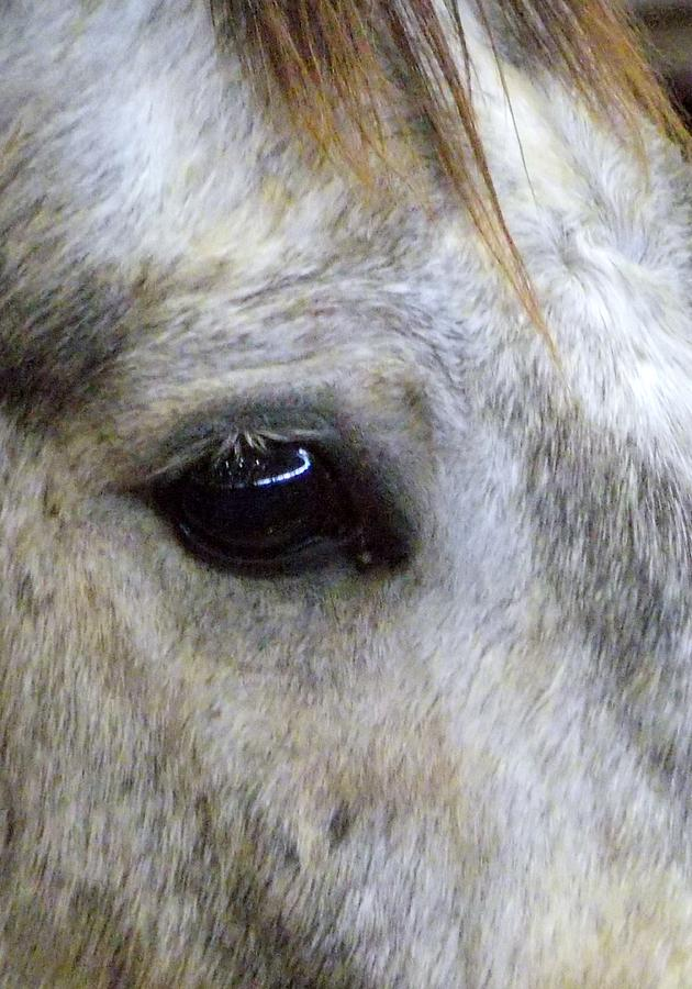 Wild Horses Photograph - His Spirit Was Stolen by John Glass