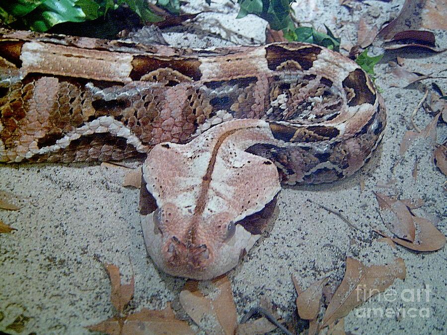 Snakes Photograph - Hissssss by Heather Morris