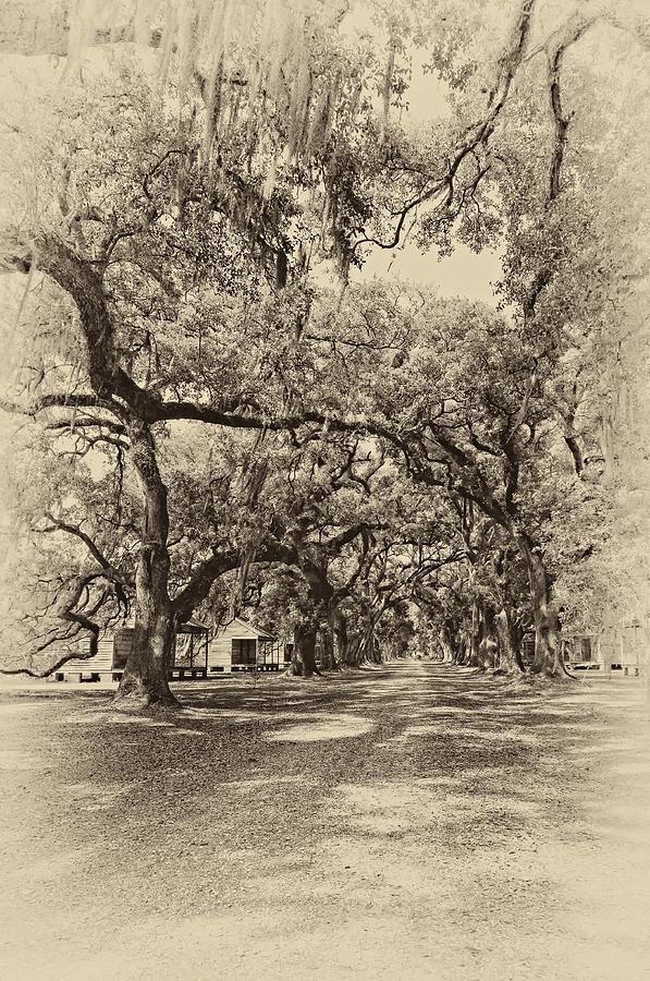 Evergreen Plantation Photograph - Historic Lane Antique Sepia by Steve Harrington