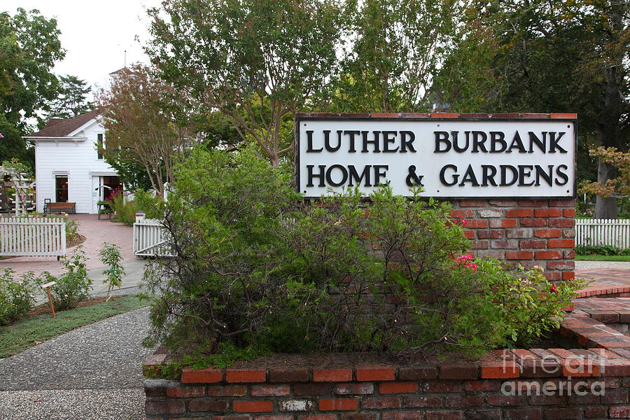 Historic Luther Burbank Home And Gardens Santa Rosa California 5d25891 Photograph By Wingsdomain
