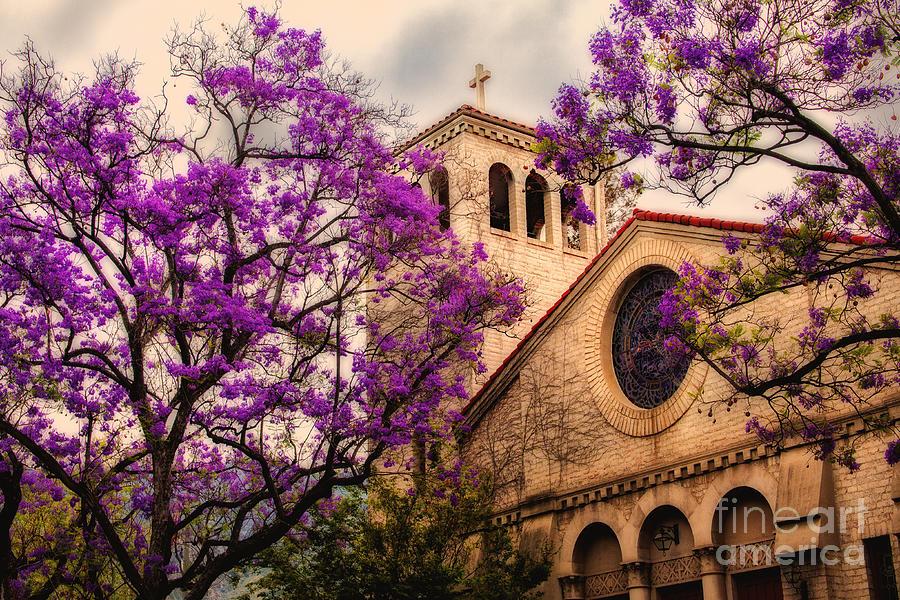 Historic Sierra Madre Congregational Church Among The Purple Jacaranda Trees  Photograph by Jerry Cowart