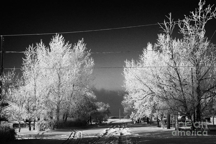 Hoar Photograph - hoar frost covered trees on street in small rural village of Forget Saskatchewan Canada by Joe Fox