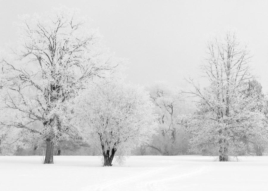 Frost Photograph - Hoar Frost Morning by Rob Huntley