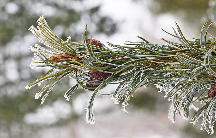 Arboretum Photograph - Hoar Frost by Steven Ralser