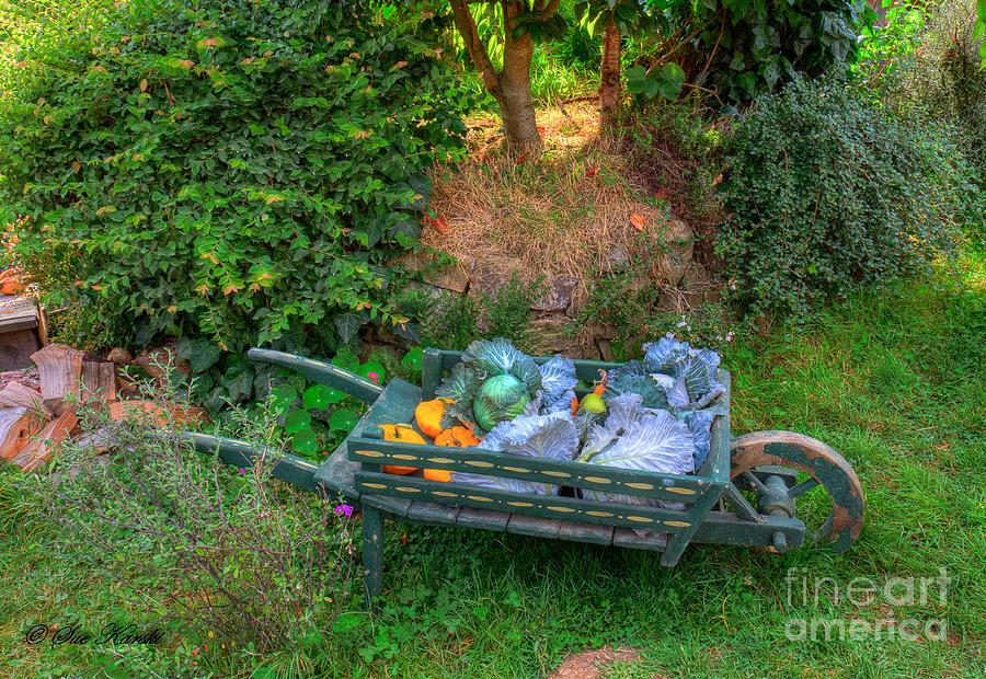Hobbit Holes Photograph - Hobbit Vegetables by Sue Karski