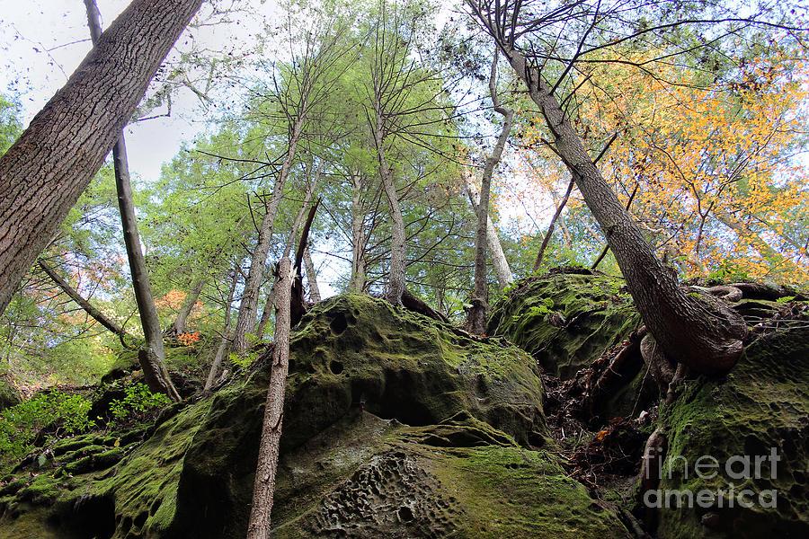 Forest Photograph - Hocking Hills Moss Covered Cliff by Karen Adams