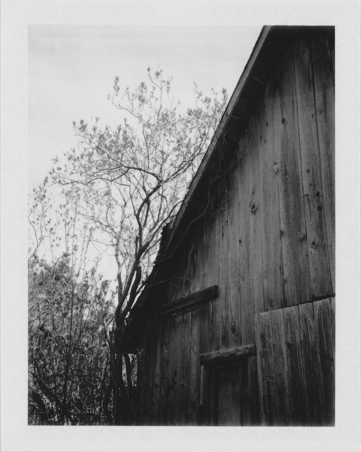 Barn Photograph - Hog Pen by Brady D Hebert