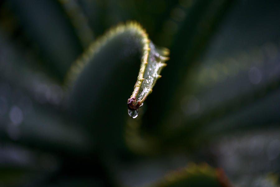 Water Photograph - Hold On by Nadalyn Larsen
