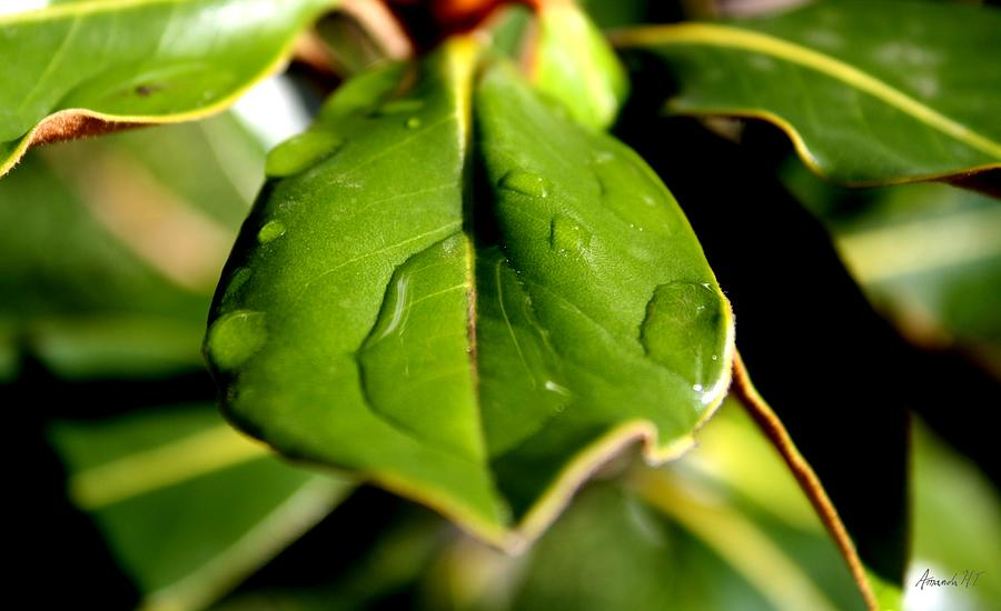 Green Leaves Photograph - Hold Onto Me by Amanda Holmes Tzafrir