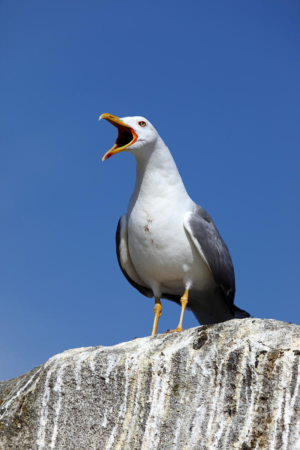 Bird Photograph - Holding Forth by James Brunker