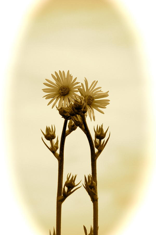 Sunflowers Photograph - Holding On by Andrea Dale