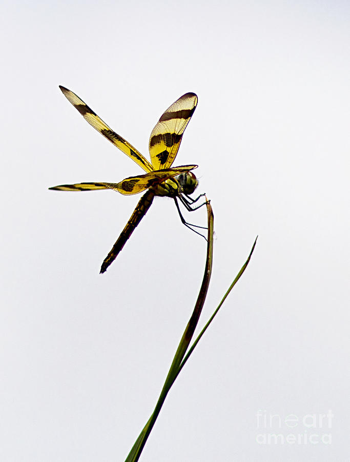 Dragon Fly Photograph - Holding On by Anne Rodkin