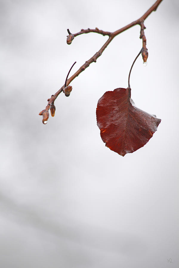 Winter Photograph - Holding On by Karol Livote