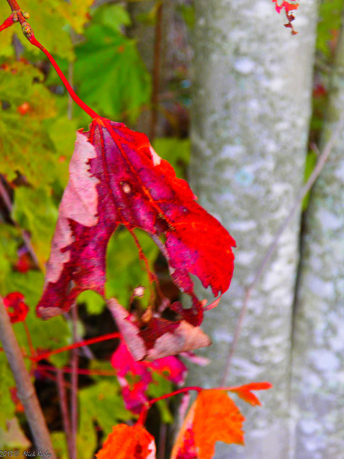 Leaves Photograph - Holey Fall by Nick Kirby