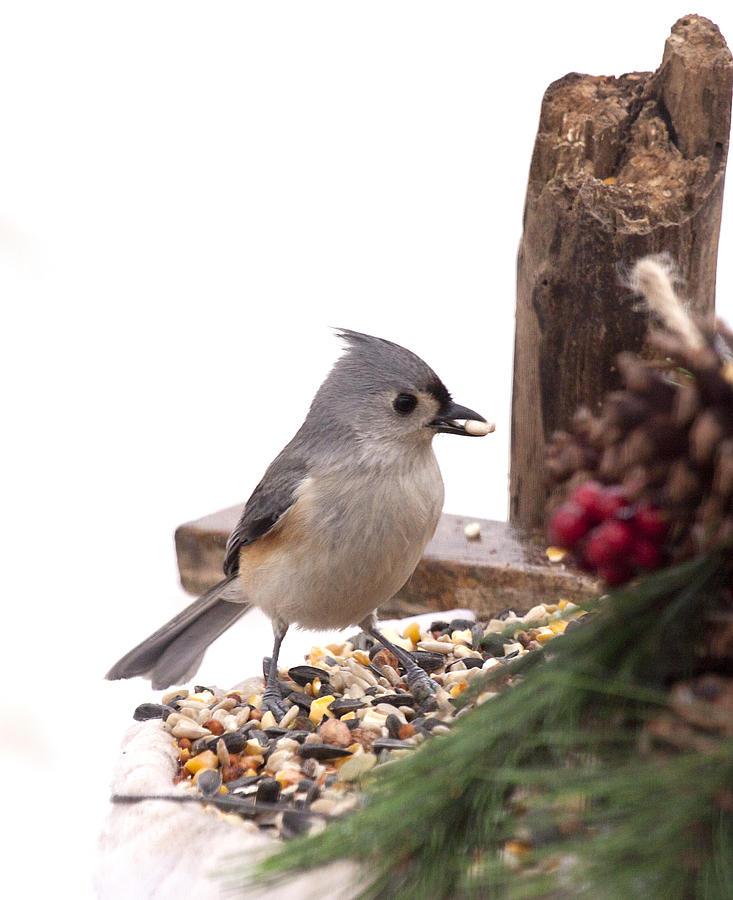 Bird Photograph - Holiday Bird by Marty Maynard